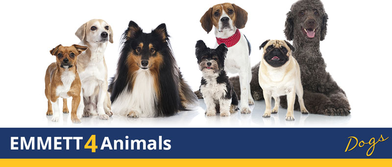 emm 4 animals dogs banner
